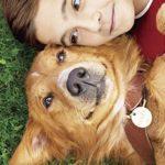 映画「僕のワンダフルライフ」の感想・ネタバレ(78点)泣ける犬の生まれ変わりストーリー